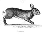 Victorian engraving of a rabbit and hare.